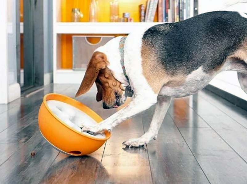 Rock 'N Bowl slows down your dogs eating and makes mealtime fun